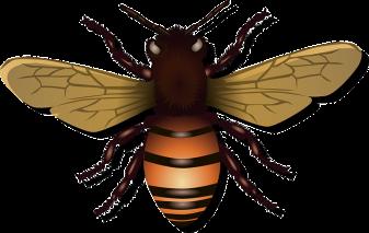 honeybee-42907_640